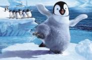 Chim cánh cụt mua vui cho khách ở Phú Quốc Chim cánh cụt mua vui cho khách ở Phú Quốc