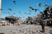 vé máy bay đi Hàn Quốc tại quận Đống Đa Đại lý bán vé máy bay đi Hàn Quốc tại quận Đống Đa
